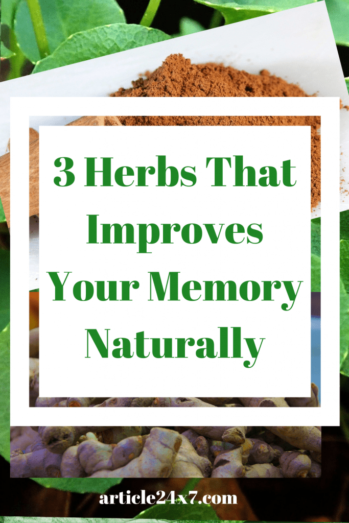 Herbs That Improves Your Memory Naturally